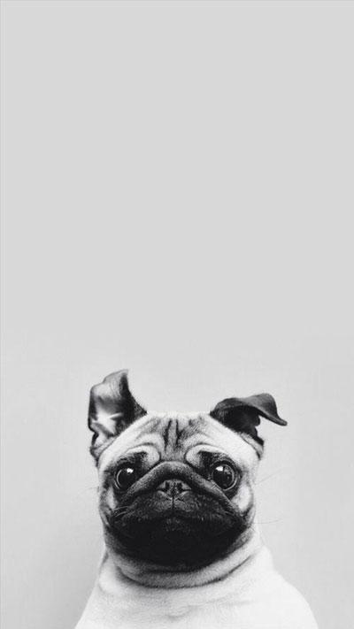 Dog Simple