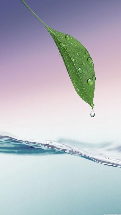 Green Leaf, Dew HD Water, Lockscreen Wallpaper