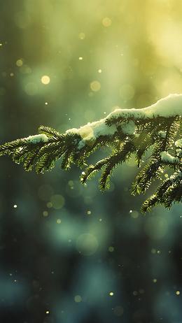 Snowing tree winter, nature mountain