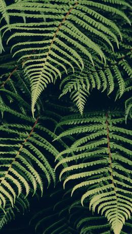 Leaf green dark nature jan erik waider