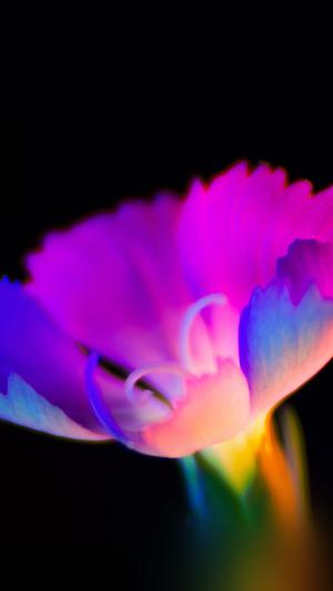 Flower dark neon color art