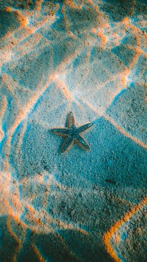 starfish-sea-beach-nature