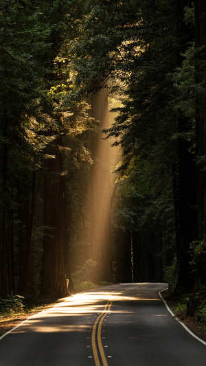 light-road-wood-forest-way-nature-green