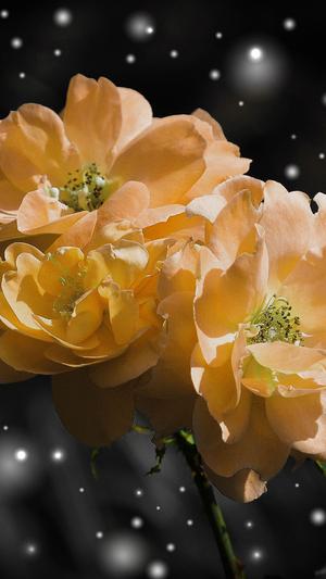 flower-yellow-snow-nature-art