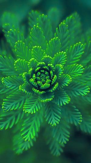 flower-green-leaf-nature-blue