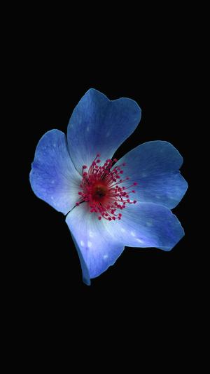 macro-flower-dark-blue-nature