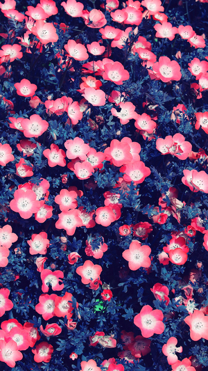 flower-spring-red-nature