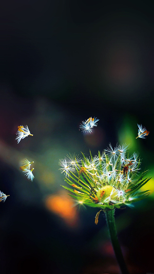blow-dandelion-flower-nature
