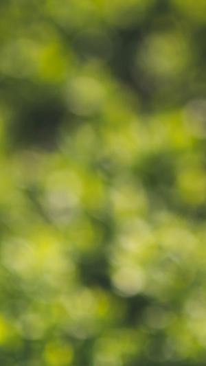 green-bokeh-grass-pattern