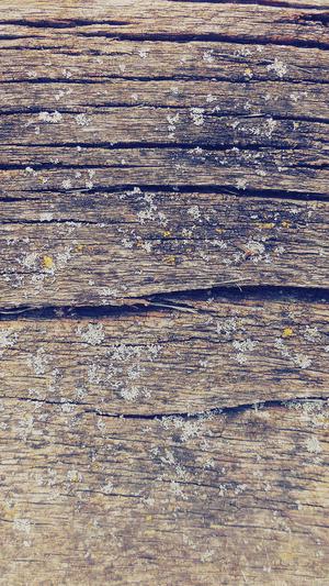 wood-art-nature-pattern-blue