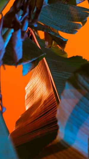 leaf-color-pattern-background
